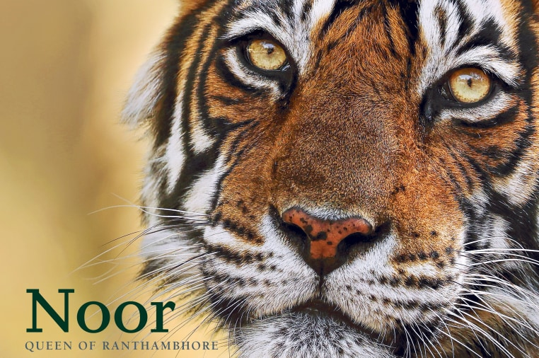 The Best Tiger Book ever made | Indiegogo